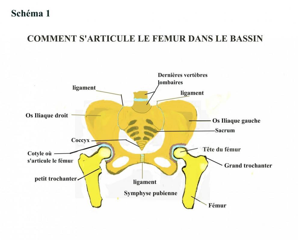 Articulation hanche 1