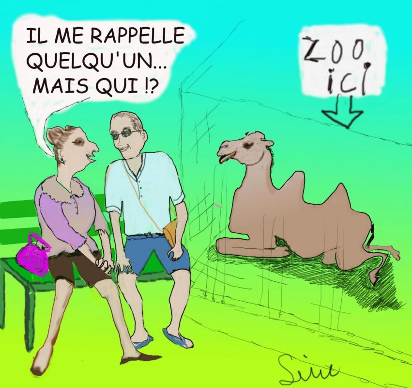 Bd zoo chameau